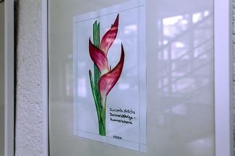 Bild Blüte